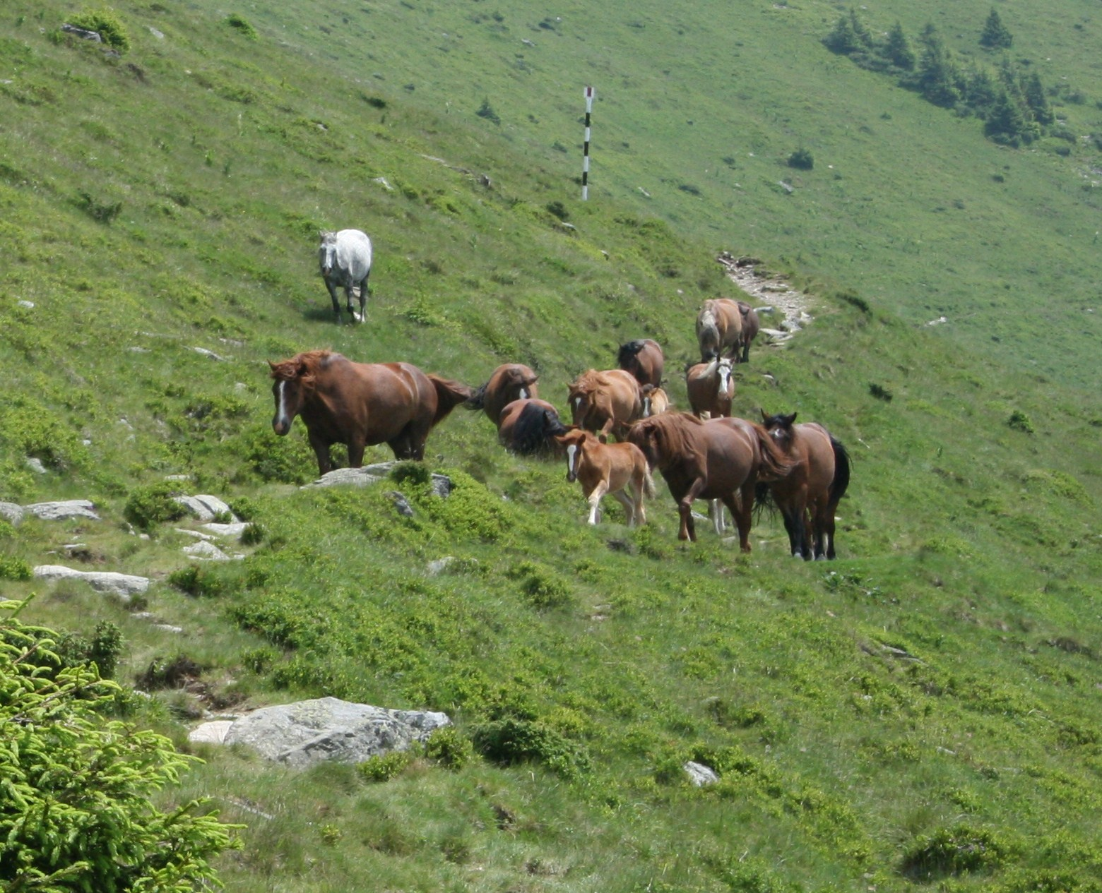 The impact of climate change on the pastoral communities of the Parang and Fagaras Mountains, Romania